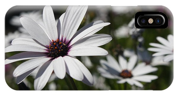 iPhone Case - Purple Daisies 2 by Kelly Holm