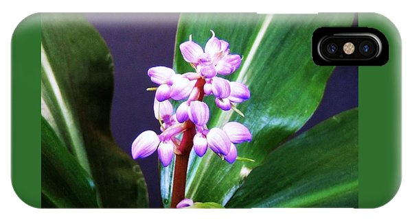 iPhone Case - Purple Ginger by Stephanie Callsen