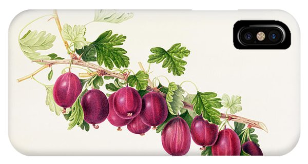 Botanical iPhone Case - Purple Gooseberry by William Hooker