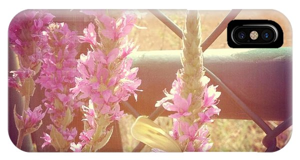 Florals iPhone Case - Purple Loosestrife by Christy Beckwith