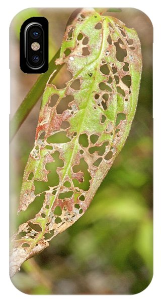 Purple Loosestrife Leaf Phone Case by Science Stock Photography
