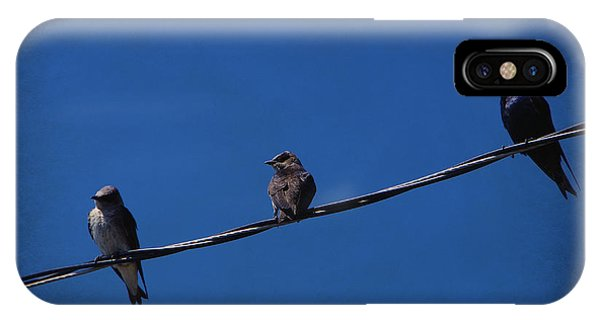 Purple Martin Trio IPhone Case