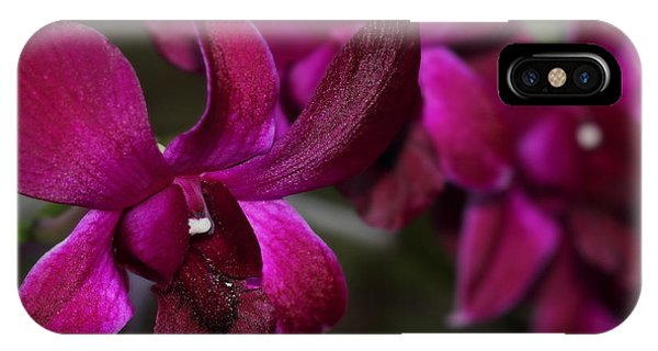 Purple Orchid IPhone Case