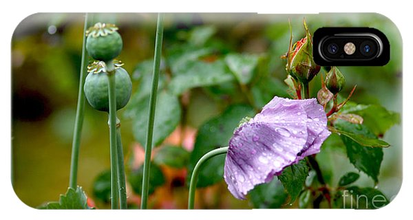 Purple Papaver Rhoeas - Poppy IPhone Case