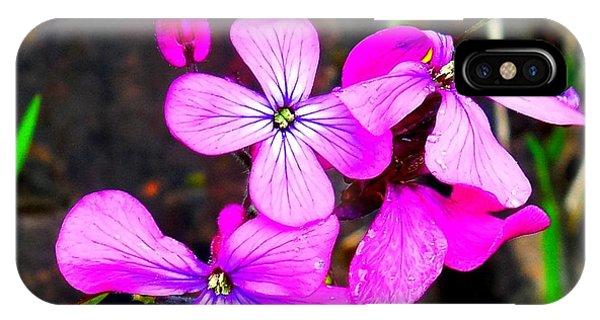 Purple Lunaria IPhone Case