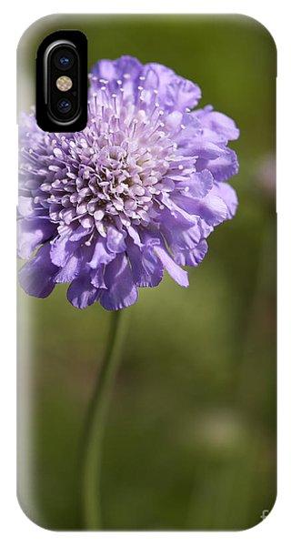 iPhone Case - Purple Scabious Columbaria by Tony Cordoza