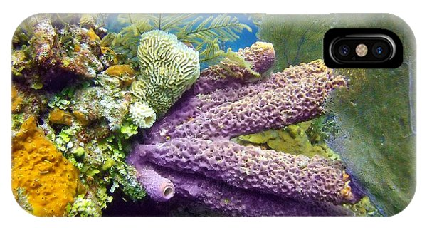 Reef Diving iPhone Case - Purple Sponge by Dave DiFiore