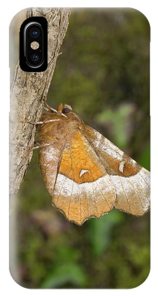 Purple Thorn Moth Phone Case by David Aubrey/science Photo Library