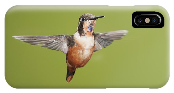 Purple-throated Woodstar Hummingbird IPhone Case