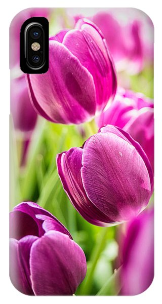 Purple Tulip Garden IPhone Case