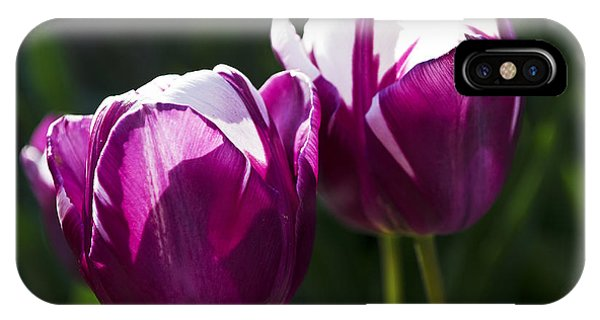 Purple Tulips IPhone Case