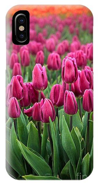 Agronomy iPhone Case - Purple Tulips by Inge Johnsson