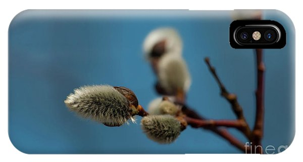 Pussy Willow... IPhone Case