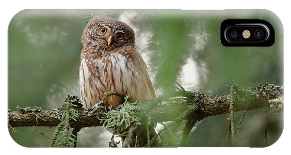 Branch iPhone Case - Pygmy Owl by Assaf Gavra