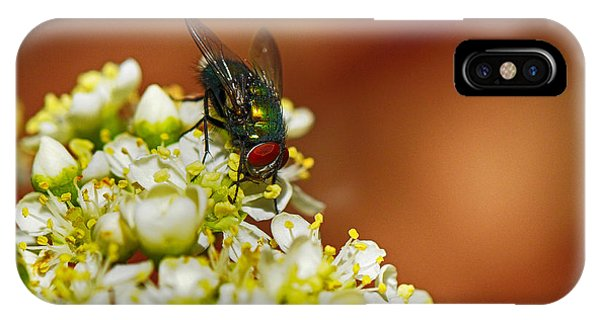 Pyracantha And Fly IPhone Case