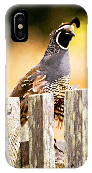 Quail Lookout IPhone Case