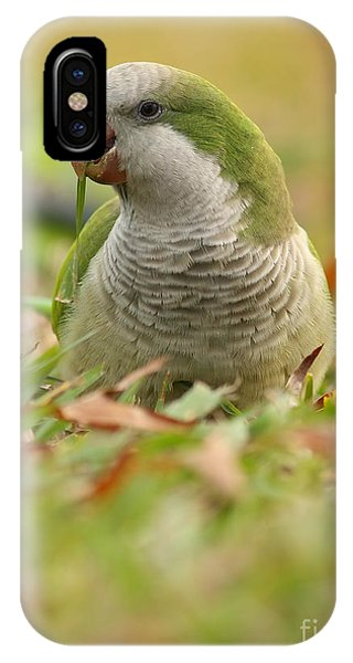 Quaker Parrot #3 IPhone Case