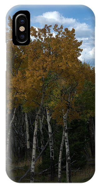 Quaking Aspen IPhone Case
