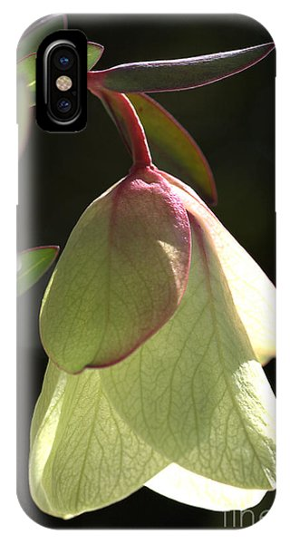 Qualup Bell Flower  IPhone Case