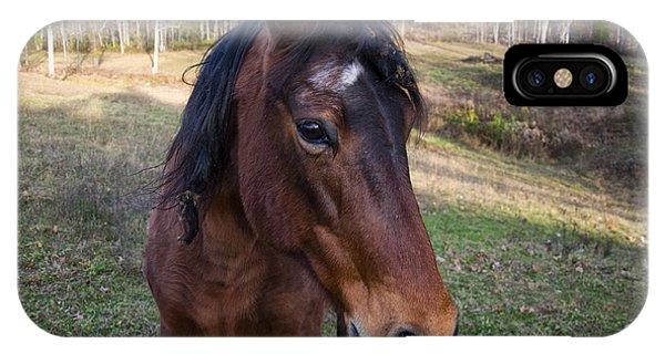 Quarter Horse Close Up IPhone Case