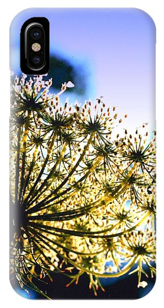 Queen Anne's Lace II IPhone Case