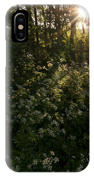 Queen Anne's Lace On The Woodland Floor IPhone Case