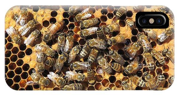 Queen Bee And Her Attendants IPhone Case
