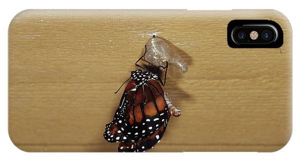 Chrysalis iPhone Case - Queen Butterfly Emerging From Chrysalis by Sally Mccrae Kuyper/science Photo Library