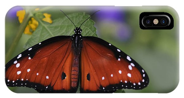 Queen Butterfly IPhone Case