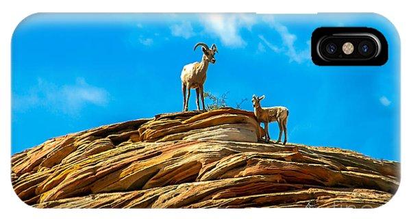 Rocky Mountain Bighorn Sheep iPhone Case - Queen Ewe by Robert Bales