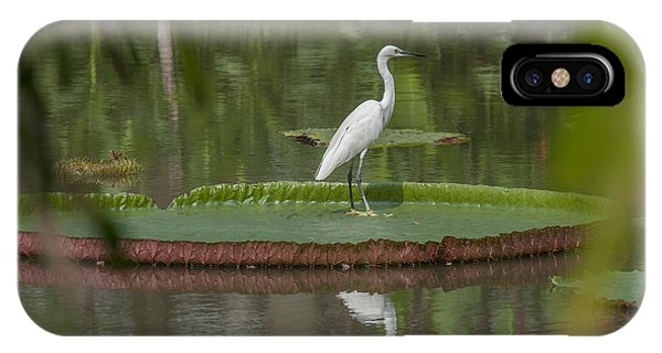 Queen Victoria Water Lily Pad With Little Egret Dthb1618 IPhone Case