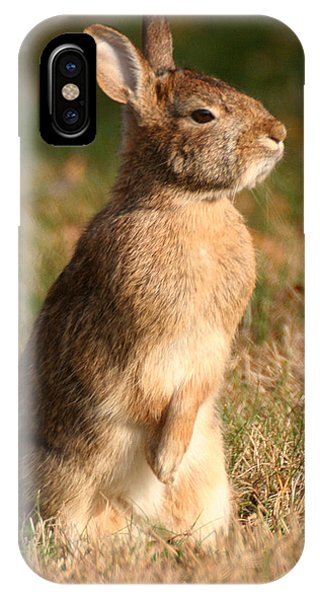 Rabbit Standing In The Sun IPhone Case