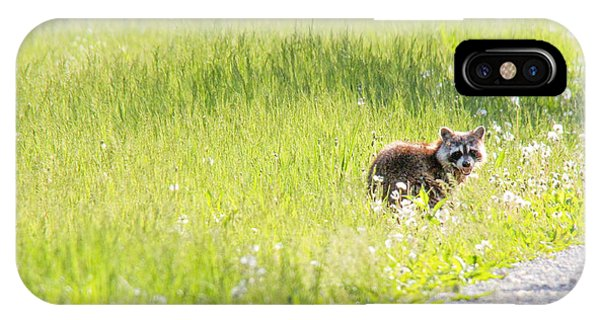 Raccoon In Green Field Phone Case by Jill Bell