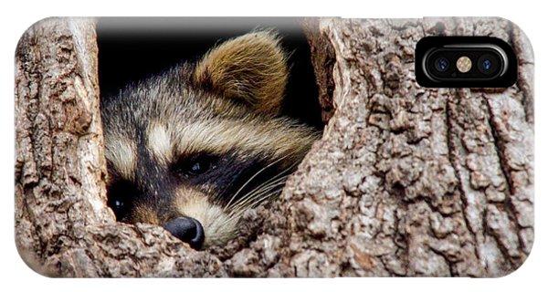 Raccoon In Tree Phone Case by Jill Bell
