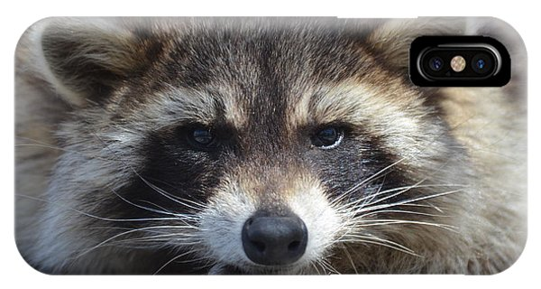 Raccoon -p IPhone Case
