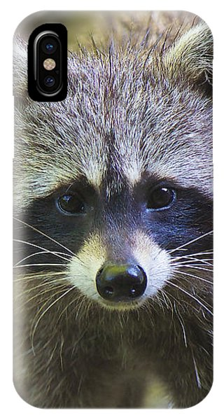 IPhone Case featuring the photograph Raccoon - Raton Laveur - Procyon Lotor by Nature and Wildlife Photography