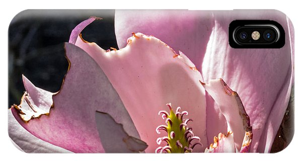 IPhone Case featuring the photograph Ragged Magnolia by Kate Brown