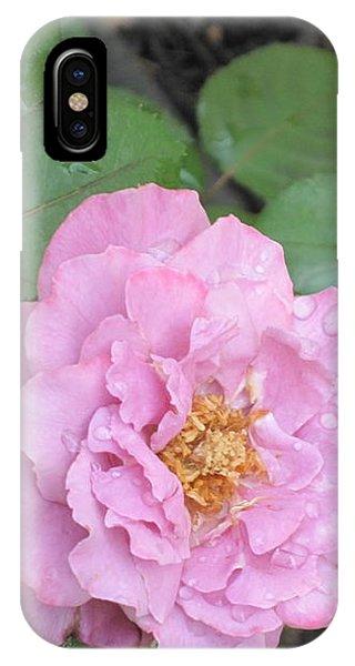 Rain Kissed Rose IPhone Case