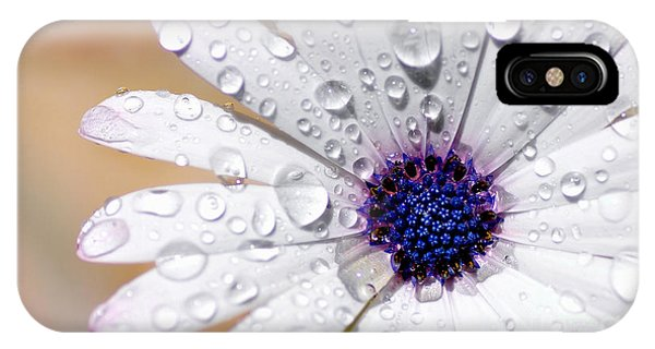 Rain Soaked Daisy IPhone Case