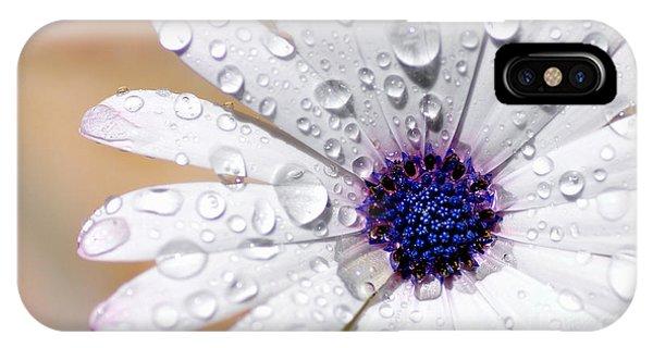 Rain Soaked Daisy IPhone Case