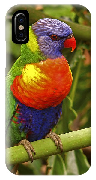 Rainbow Lorikeet.  IPhone Case