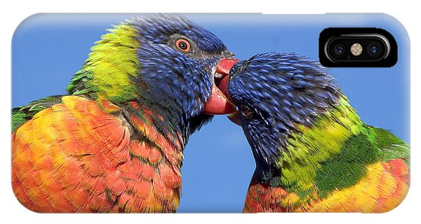 Canberra iPhone Case - Rainbow Lorikeets by Steven Ralser