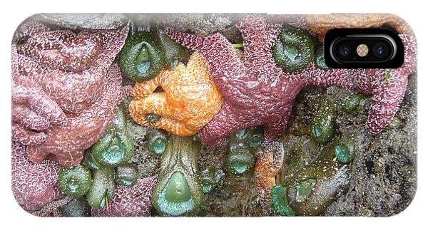 Rainbow Of Sea Creatures IPhone Case