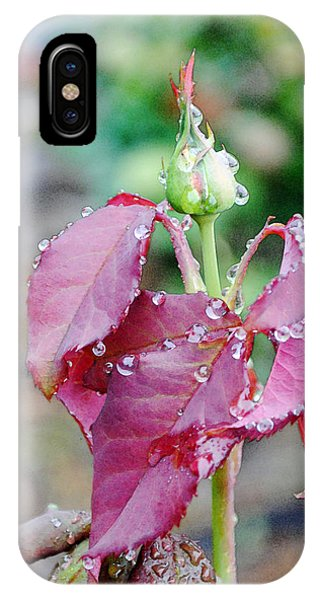 Raindrops And Rosebud 1 IPhone Case