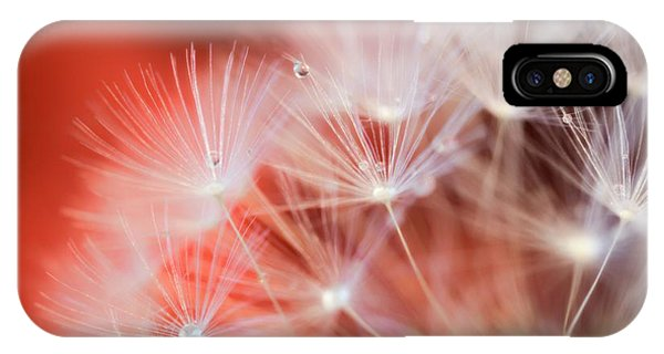 Raindrops On Dandelion Red IPhone Case