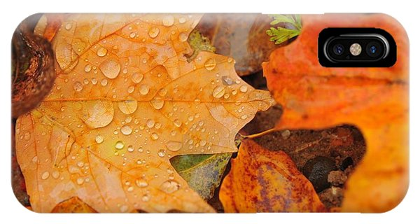 Raindrops On Fallen Maple Leaf IPhone Case
