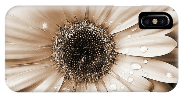 Amber iPhone Case - Raindrops On Gerber Daisy Sepia by Jennie Marie Schell