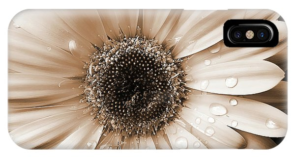 Raindrops On Gerber Daisy Sepia IPhone Case