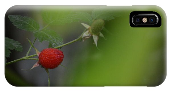 Raspberryt In The Jungle IPhone Case