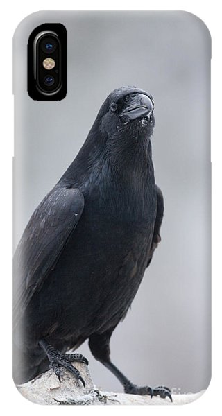 Raven On A Birch Log Phone Case by Tim Grams